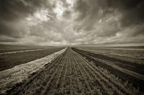 Wheat1072