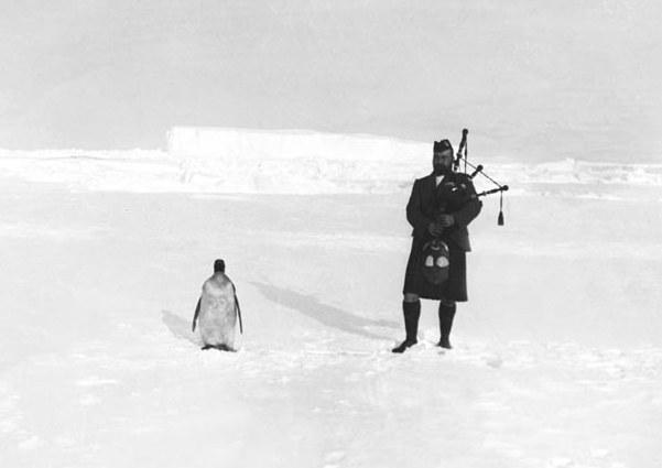 Penguin-II