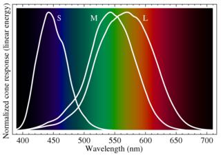 1000px-Cone-fundamentals-with-srgb-spectrum.svg