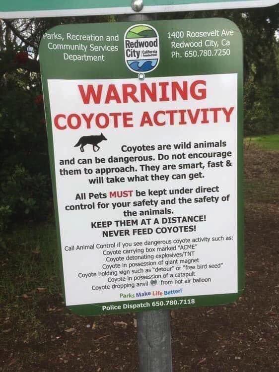 Coyote562